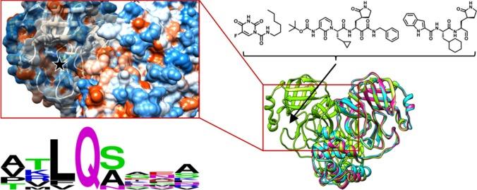 SARS-CoV-2 protease.jpg